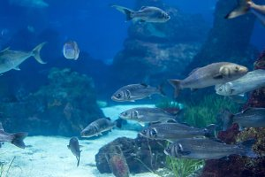 underwater life