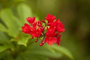 red flowers in the outdoor garden