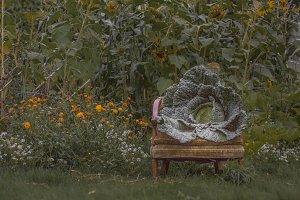 Savoy Cabbage on Chair