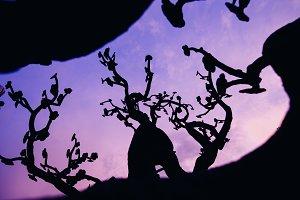 Abstract tree over a dark sky