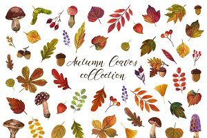 Watercolor autumn leaves collection.
