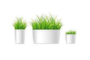 3d Grass Houseplant Set. Vector
