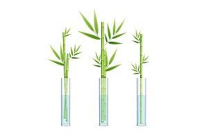 3d Lucky Bamboo Plant or Dracaena