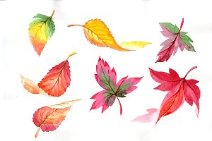Colorful autumn leaves watercolor