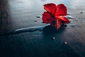 Maldives flower
