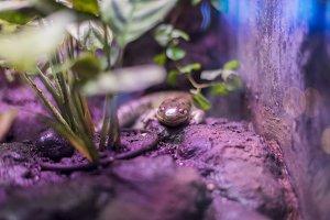 newt resting