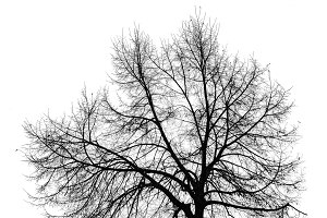 Leave Less Tree Isolated Graphic Sil