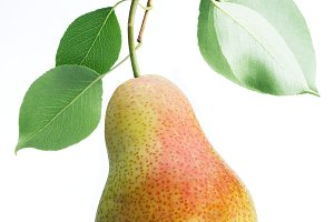 One pear fruit with pear leaves on w