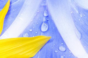 texture of a blue flower and yellow
