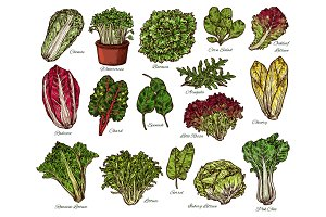 Salads and farm lettuce vegetables