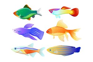 Aquarium Fish Specie Cartoon