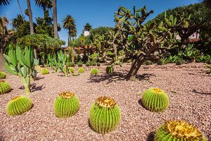 Cactus park at beverly gardens park