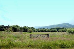 Wild Flower Meadow Gate Wales