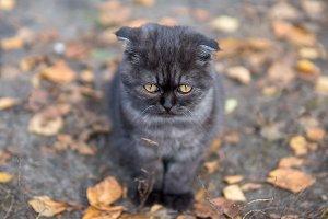 the cat looks askance