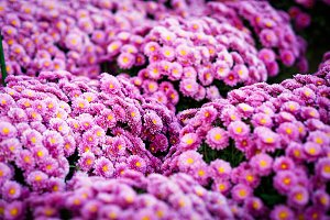 Close up Beautiful flowers of