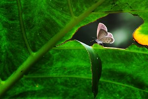 butterfly, butterfly on a branch