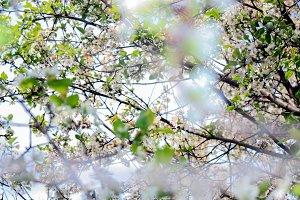 Garden tree in bloom