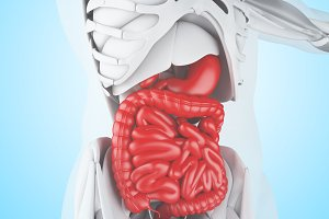 3d illustration of Digestive System
