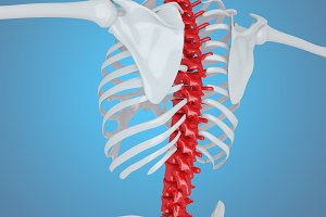 3d illustration of Human skeleton ba