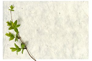 vintage background with green branch