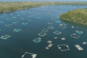 Fish farm in the sea.