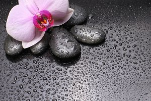 orchid flower with black stones