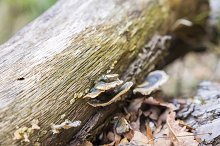 strange mushroom