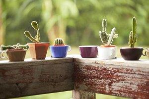 Closeup cactus in garden decoration