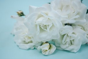 Bouquet of white roses on a blue