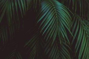 Dark Tropical Palm Leaves
