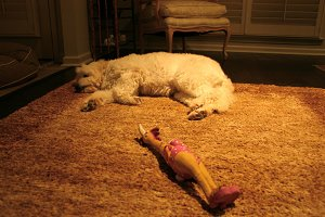 Sleeping Dog and Rubber Chicken