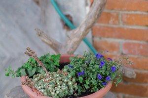 succulents in rustic planter
