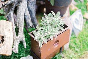 little herb planter