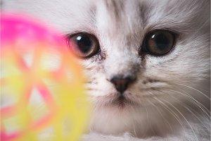 white adorable cat portrait close-up