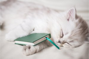white adorable cat is sleeping after