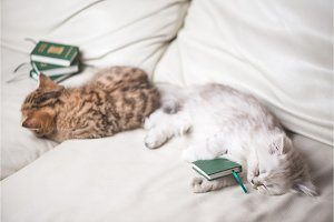 two adorable little cats are tired
