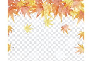 Maple leaves on transparency grid