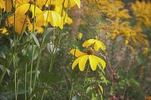 iseeyouflower softyellow