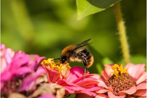 photo of a beautiful bee and flowers
