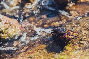 Wet sea crab on the stone. sunny