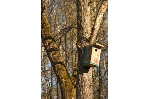 wooden birdhouse hangs on the tree
