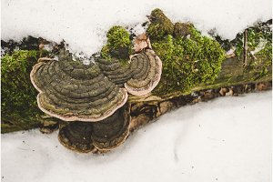 Rotten tree trunk with fungus and