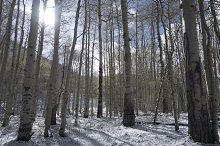 Winter Forest in Colorado