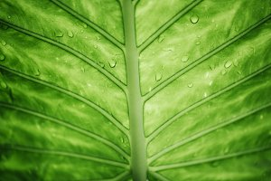 Green leaf background. Ecology conce