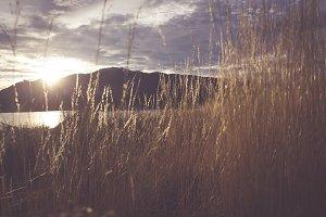 The Tall Grass, New Zealand