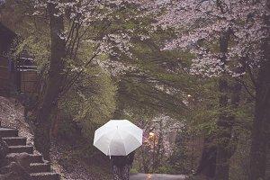 Walking through cherry blossom