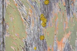 Paint on wood texture