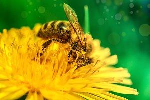 macro picture of bee pollen on a dan