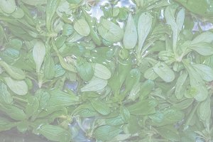 Green salad vegetables, soft faded t