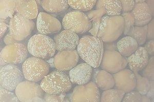 caper (Capparis spinosa) fruit food,